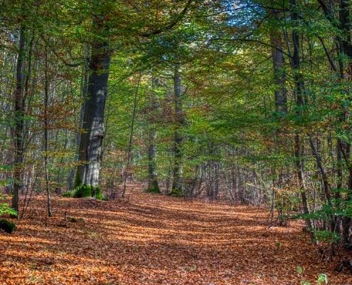 lgrüne bäume und laub auf dem boden