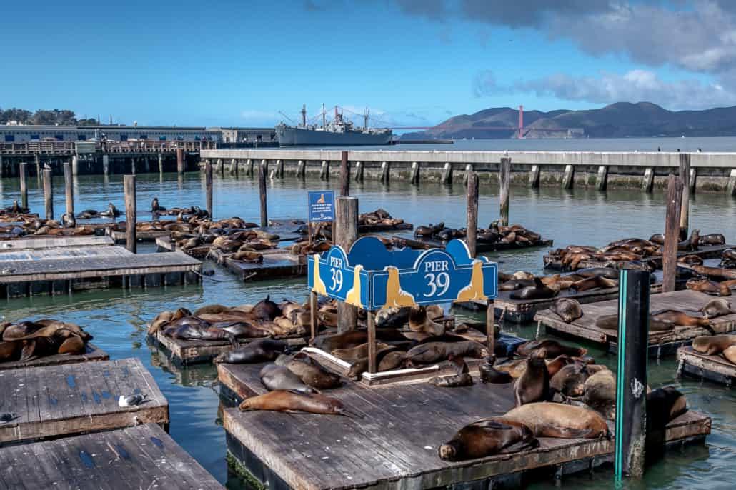 Pier39 und die Seelöwen
